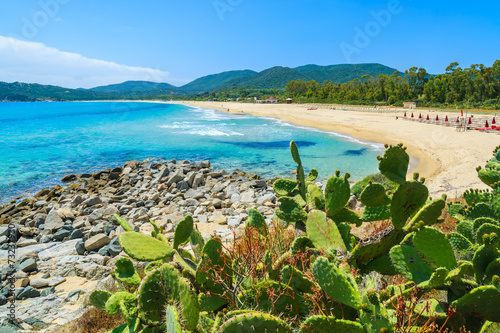 Cactus plants at Cala Sinzias bay and sea view, Sardinia island - 73237930