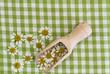 Fresh chamomile flowers on wooden scoop on checkered cloth