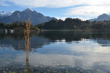 Poplar invasion on the shore of lake Nahuel Huapi