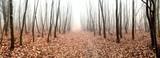 Herbstlaub im Wald