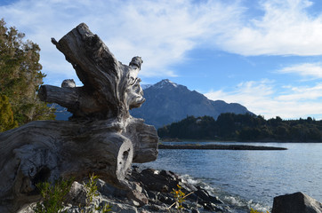 Driftwood at Lake Nahuel Huapi, Patagonian Andes, Bariloche