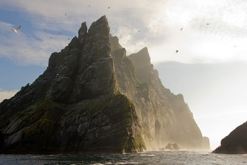 Northern gannets seen on the steep cliffs of St Kilda, UK