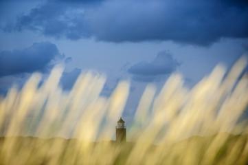 Leuchtturm von Kampen durch Schilf fotografiert