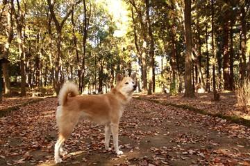 秋の森に佇む犬
