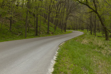 Road In Woods Spring
