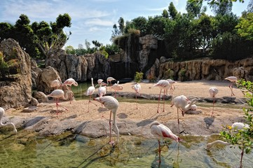 A group of pink flamingo in natural environment.