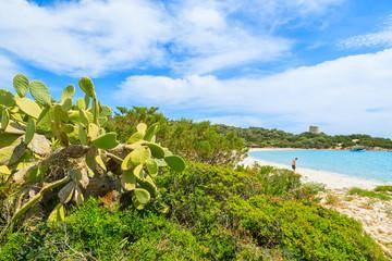 Green cactus plants on Cala Pira beach, Sardinia island, Italy