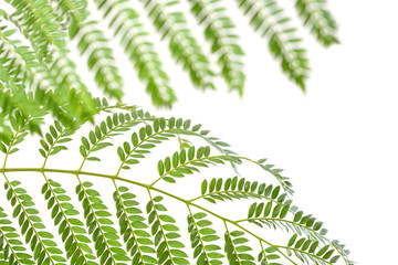 plant with green leafs isolated on white