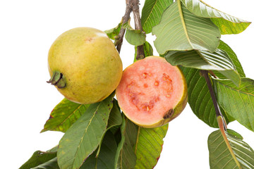 two organic, biologic cultivated, guavas, one cut in half in a t
