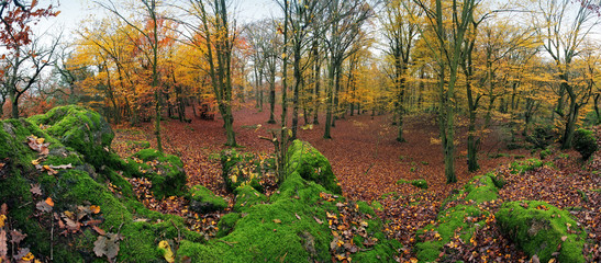 Forest panorama at autumn with green rocks