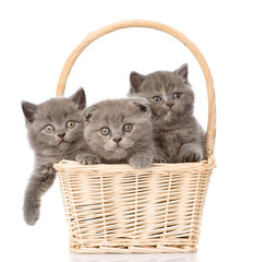 group kittens in basket looking at camera. isolated on white bac