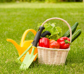 vegetables in basket and garden tools on green grass