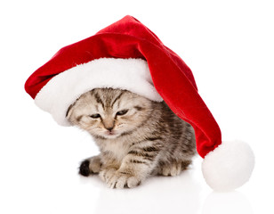 sad scottish kitten with red santa hat. isolated on white backgr