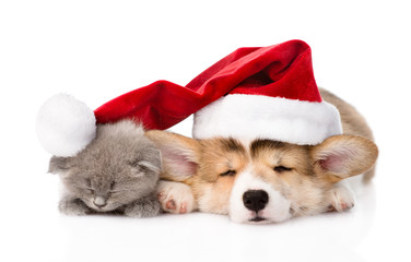 sleeping Pembroke Welsh Corgi puppy and kitten with red santa ha