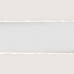 Torn paper on transparent background. Design template, Vector