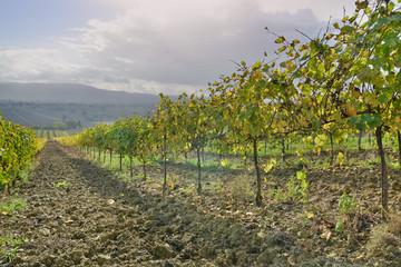 terre di vini