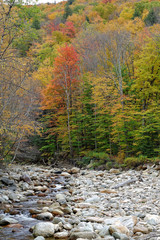 Fall in Vermont 13