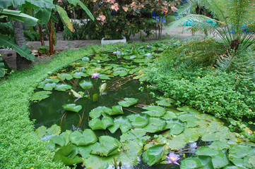 Water plants garden at Maldives island