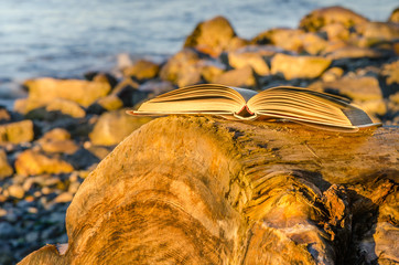 Book on a Log at Sunset
