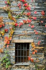 ventana y enredadera