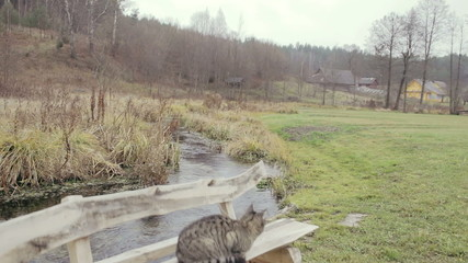 Cat jumps of the bench in Lithuania village