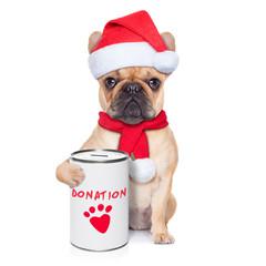 donation dog