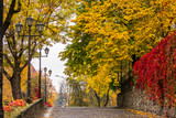 autumn cityscape after rain, with yellowed trees and street lamp - 73260544