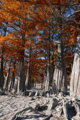 Autumn time. fantastic trees