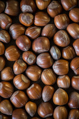 Fresh autumn hazelnuts background
