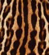 pelle di ocelot