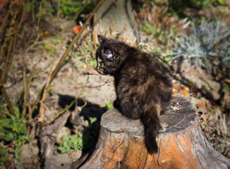 Cute kitten outdoors