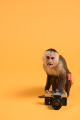 Monkey with retro vintage camera