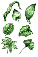 Types and leaf shape. Botany