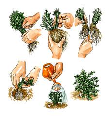 Planting seedlings plants. Botany