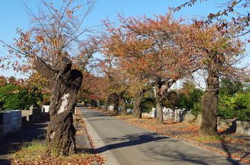 多磨霊園の秋