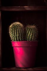 Home decoration, cactus on rustic shelf