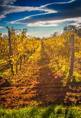 Mediterranean Vineyard on the hill