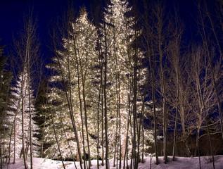 Outdoor Winter Lights 1