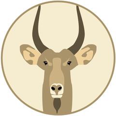 Goat - Illustration