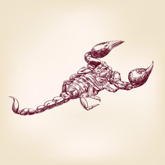 Scorpion  hand drawn vector llustration realistic sketch