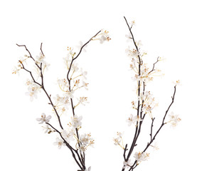 Artificial white sakura flower isolated