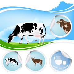 Cow.Farming dairy product.Fresh milk