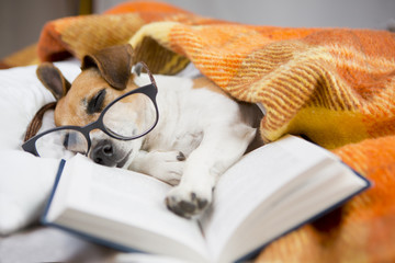 Dog asleep reading book