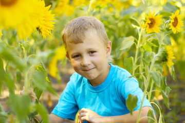 boy in sunflowers