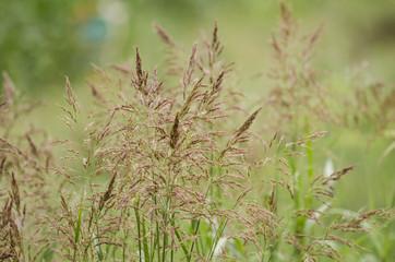 Tall field grass