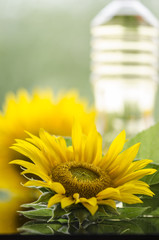 Sunflower and sunflower oil bottle