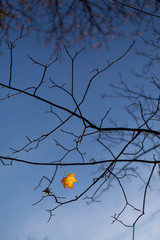 Last autumn leave