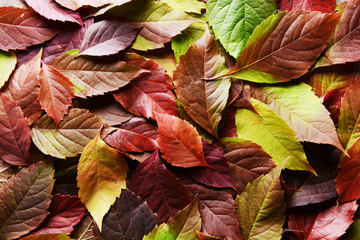 Bright background made of autumn leaves