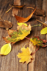 Beautiful autumn leaves on wooden background