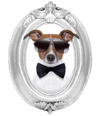 dog in a frame